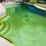 Pool Wasser grün